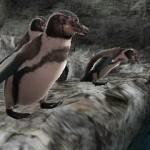 Nuevas imágenes de Animal Resort