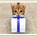 Nintendogs+Cats