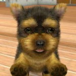 Review Nintendogs + Cats