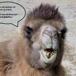 La opinión de Camello Robot. #1